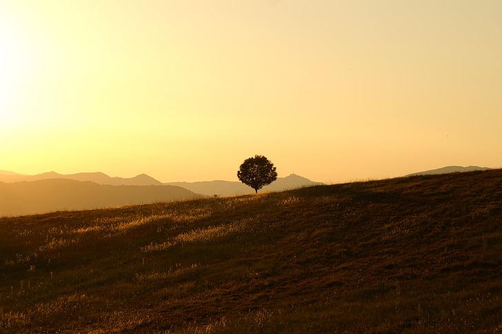 arbre, solitari, paisatge, l'Úmbria, sol ponent, posta de sol, natura