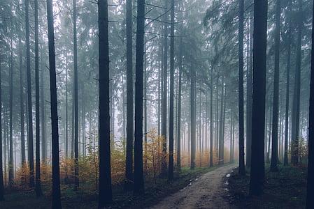 bakbelysning, gren, bartre, daggry, miljø, høst, tåke
