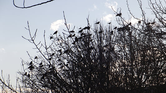 birds, branch, nature