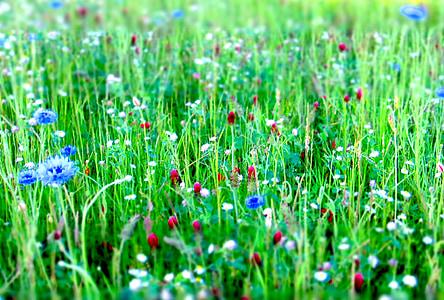 Prat de flors, flors, Prat, natura, l'estiu, flor, primavera