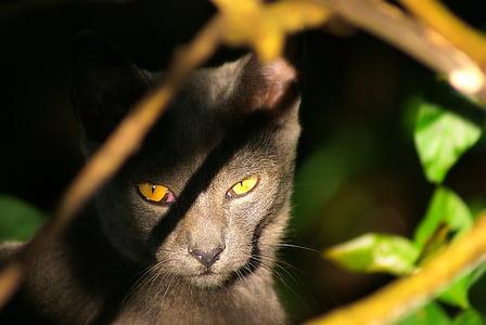 cat, wild, feline, look, mystery, feline look, cat's eyes