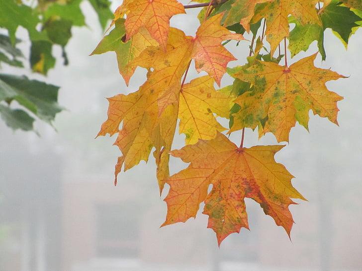 jeseň, farby jesene, jesenné lístie, javor, Orange, hmla, Jesenná nálada