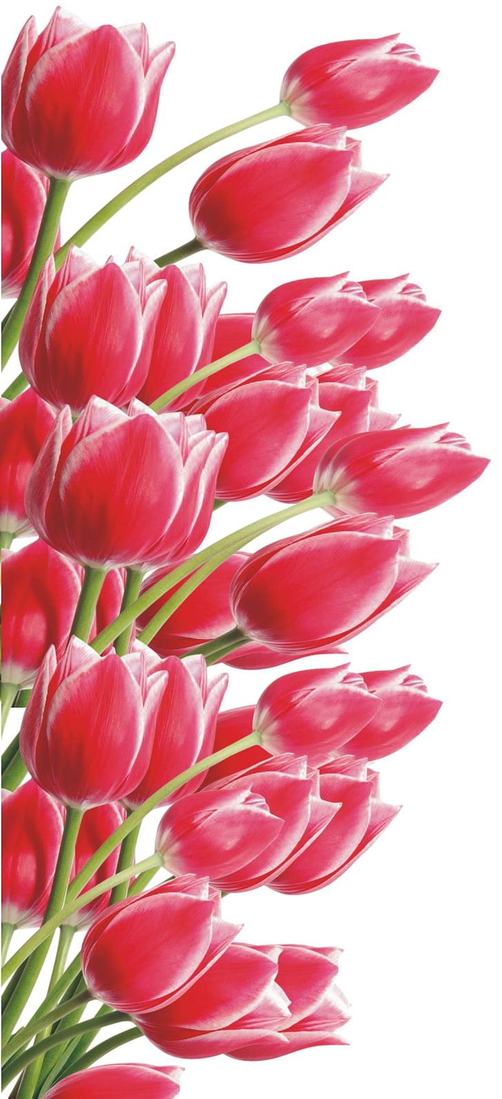 Lily, Hoa, màu đỏ, bó hoa, Lễ kỷ niệm, thanh lịch, cửa hàng Hoa