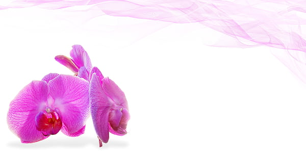 Wellness, Schönheit, Blume, Deko, Anlage, Massage, Orchidee