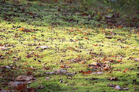sotabosc, llum del sol, verd, natura, caminar al bosc, molsa, planta
