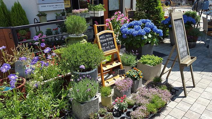 Cvetličarna, cvetje, sredozemski, Cheonan, asan, sredozemske street
