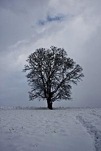 cloud, snow, winter, tree, landscape, snow landscape