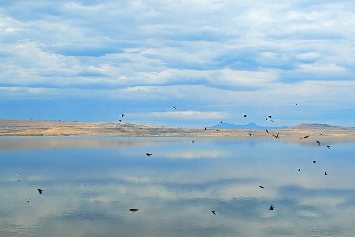 Tom, Great salt lake, salt lake city, Lake, zout, water, vogels