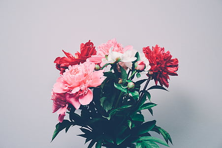 bouquet, flowers, red, pink, nature, petal, pink Color