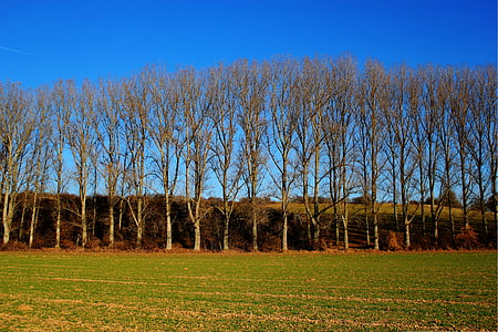 field, trees, sky, fields, blue, fog, blue sky