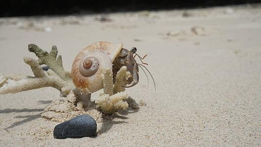 cangrejo, Seashell, arena, Playa, concha de peregrino, Playa de arena, tropical
