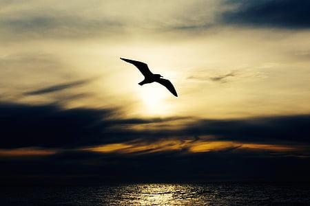 sjöfågel, fågel, naturen, djur, Seagull, flyg, vingar