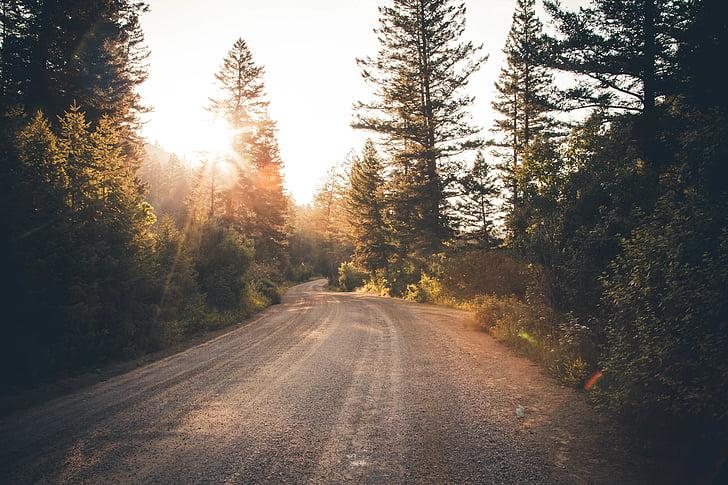 grusväg, skogen, naturen, Road, träd