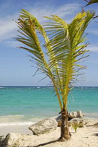 representant Dom, República Dominicana, Carib, vacances, sol, vacances de somni, palmeres