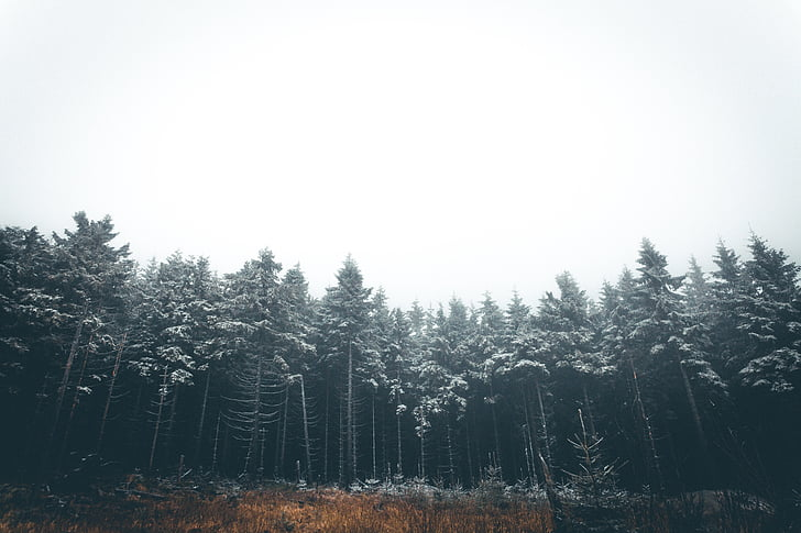 árvores, plantas, natureza, floresta, nebuloso, paisagem, árvore