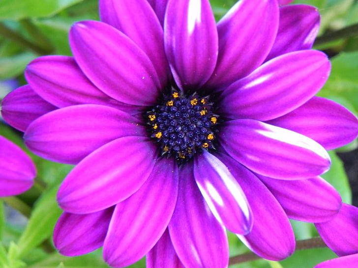 porpra, blanc, flor, flor petita, blanc porpra, flors silvestres, flors