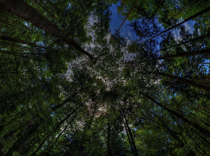dalt dels arbres, bosc màgic, bosc, arbres, natura, bosc de conte de fades, grove druida