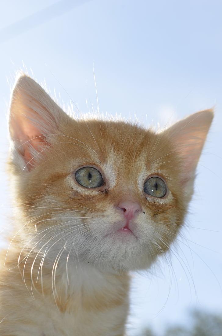 Slatka maca slika