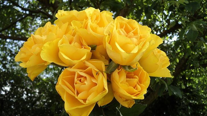 Rosas, ramo de la, rosas amarillas, ramo de rosas, flor color de rosa, ramo de flores sobre fondo verde, romántica