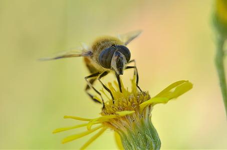 macro, photo, hummingbird, moth, yellow, flower, insects