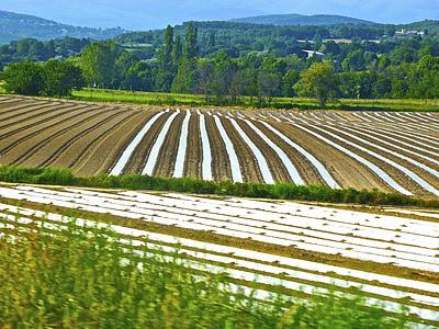 Obrezivanje, redaka, Poljoprivreda, polje, farma, hrana, biljka