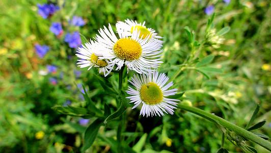 blomster, planter, natur, blomst, blomstrende planter, eng, hage