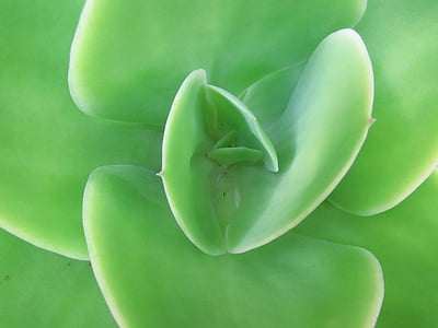 planta, verd, fulla, natura, fresc, natural