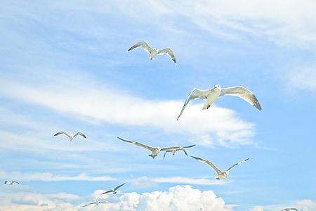 måsar, Sky, fågel mot himlen, fågel, Seagull, havet, sommar
