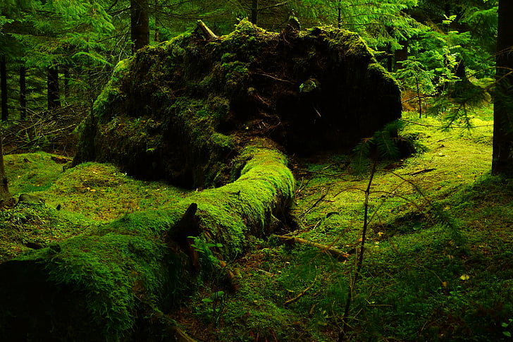 forest, moss, norway, nature, green color, no people, outdoors