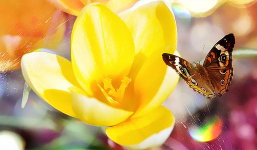 минзухар, цвете, Пролетно цвете, Блосъм, Блум, жълто, пеперуда