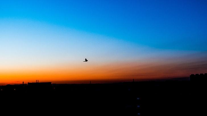 bleu, orange, silhouette, chenguang, le soleil du matin, matin