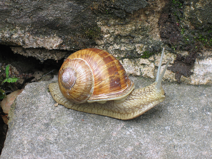 snail, away, shell, stone