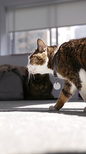 cat mia, walk, pet
