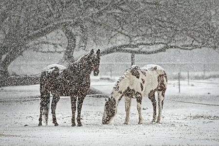 con ngựa, ngựa, tuyết, tuyết rơi, mùa đông, Cưỡi ngựa, động vật