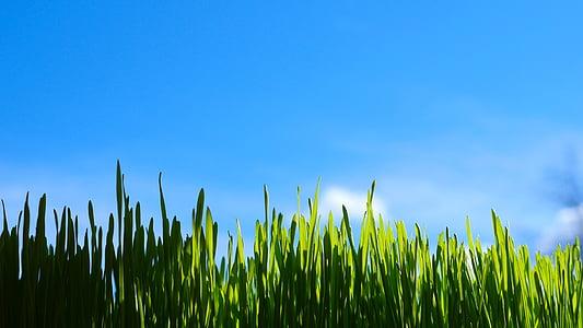 erba, natura, verde, estate, campo, all'aperto, campo verde