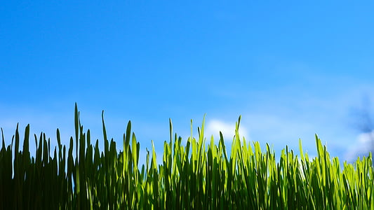 herba, natura, verd, l'estiu, camp, l'aire lliure, camp verd