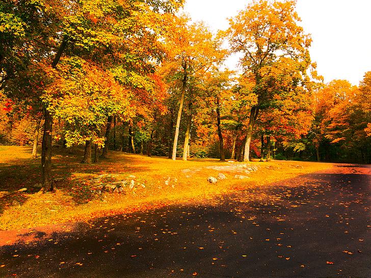 jeseň, farby jesene, jeseň, Zlatá jeseň