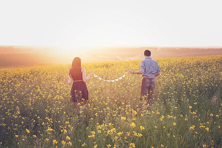 colza, parella, camp, posta de sol, en l'amor, caminant, somni