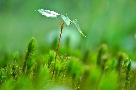 tree, young, sprout, macro, closeup, shoot, fresh