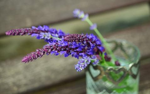 Sàlvia, lavanda, herbes, porpra, flor, flor, planta