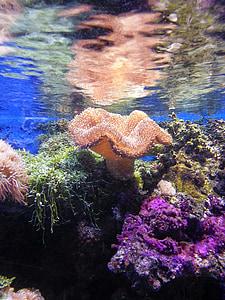 coral, under the sea, sea, ocean, underwater, water, blue