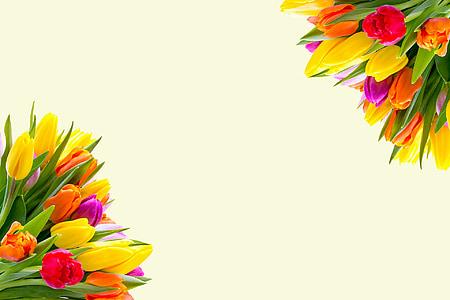 Tulipani, fiori, primavera, floreale, fiori di primavera, Mazzo di fiori, Mazzo di fiori
