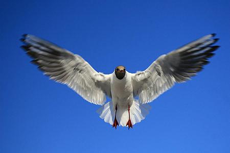 Racek, pták, Já?, Baltské moře