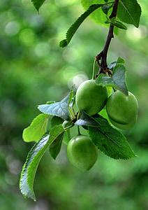 fruita, verd, aliments, Sa, fresc, Orgànica, menjar
