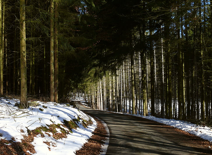 winter, forest, forest path, snow, landscape, winter way, nature