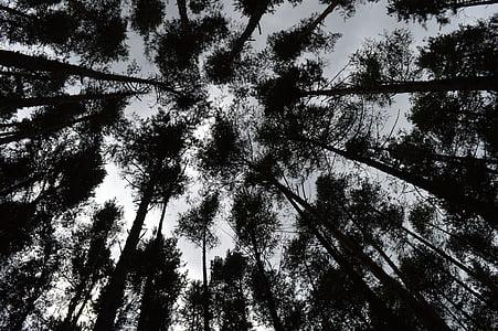 gozd, dreves, ozadje, ozadje slike, narave, krajine, Megla