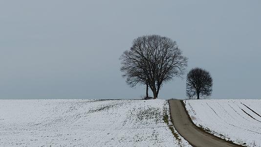winter, tree, snow, winter trees, nature, mood, wintry