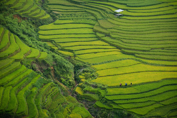 nông nghiệp, cây trồng, đất trồng trọt, Trang trại, nông nghiệp, đất nông nghiệp, lĩnh vực