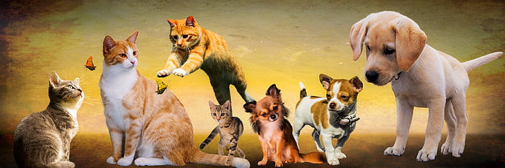 animals, dogs, cat, play, young animals, puppy, jump
