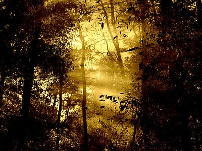 morning, fog, morning light, trees, nature, sun beam, tree